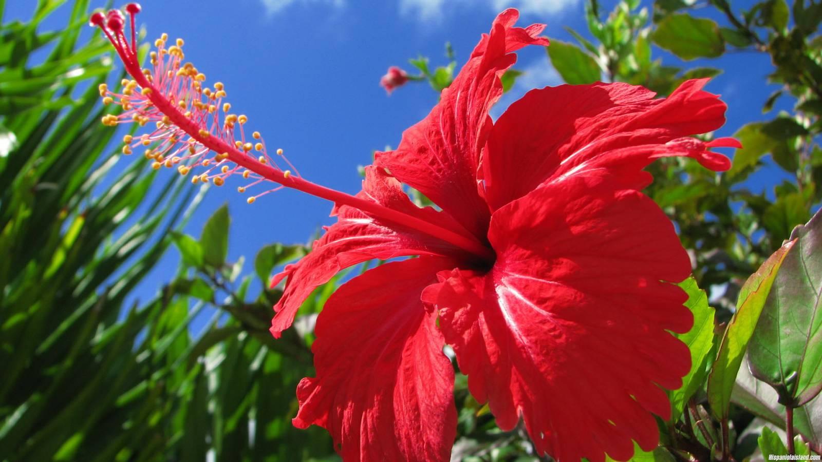 Цветы мужегоны в картинках 4