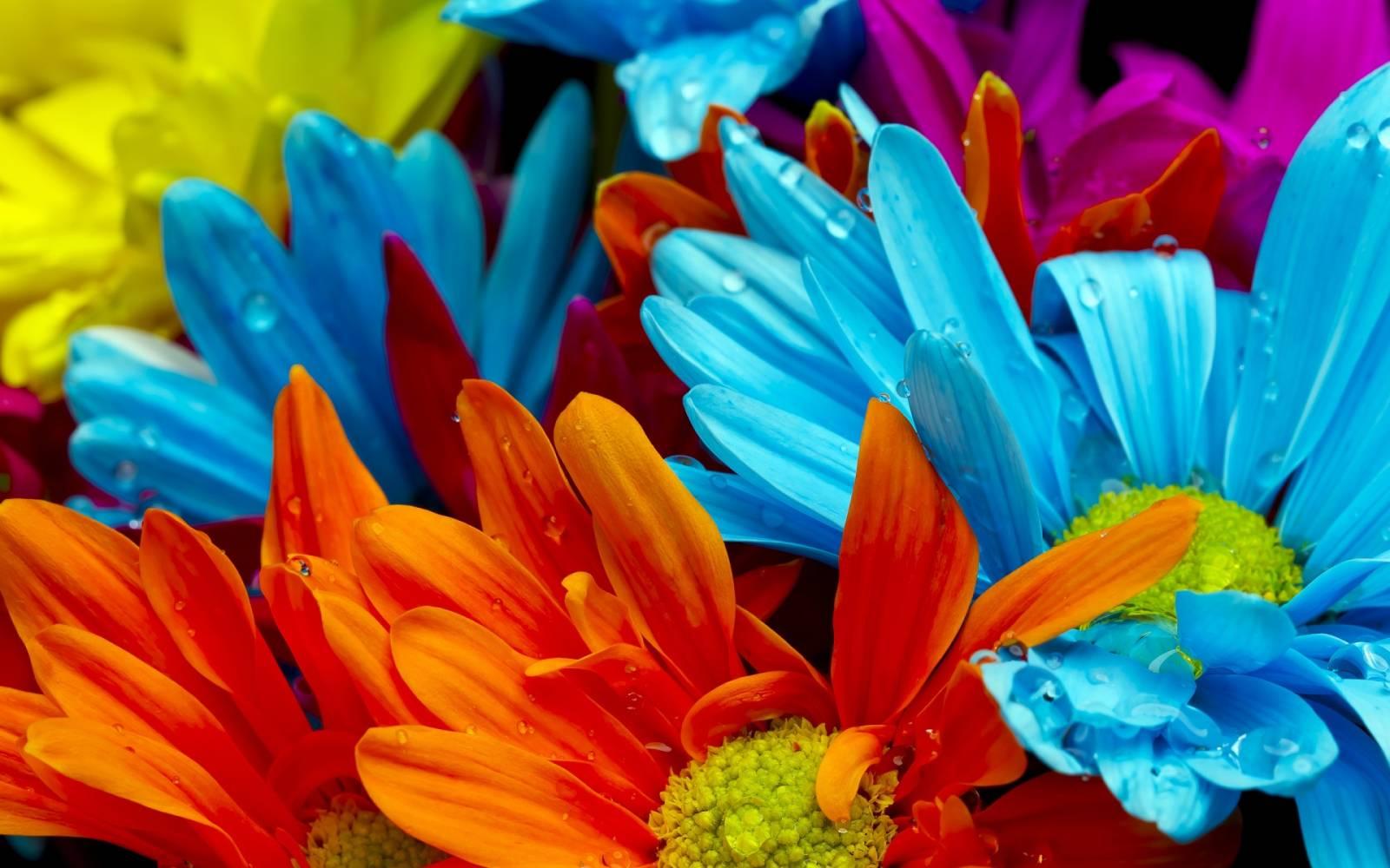 Комнатные цветы для спальни фото 1