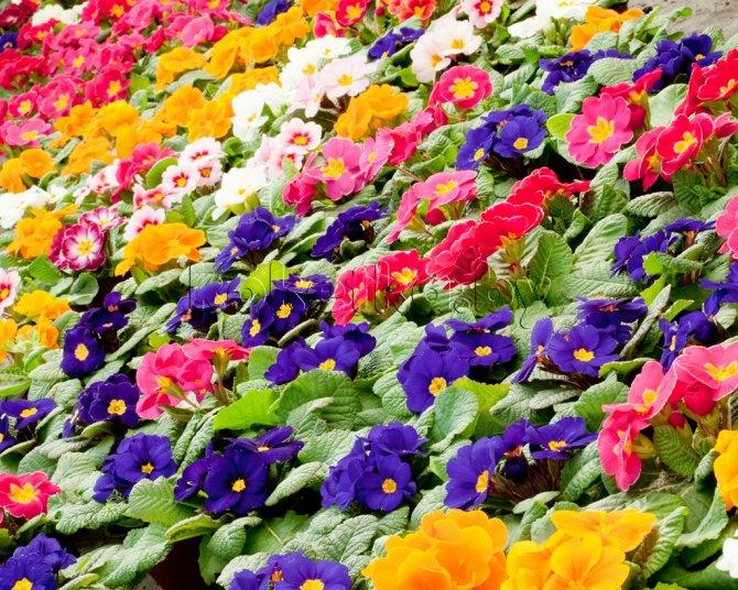 Фото уличных цветов 11